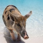 CbTravel_Forest-Simon _Bahama's